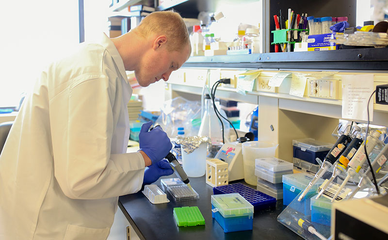 Matthew Lauver, a graduate student in the Department of Microbiology & Immunology at Penn State College of Medicine, is seen at work at the bench in a department laboratory in July 2016.
